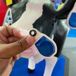 true digital cow ear tag